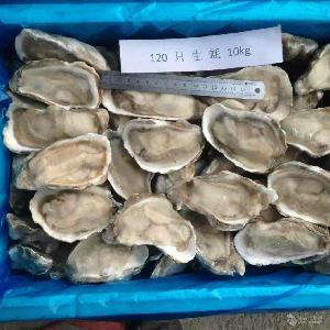 冷冻原浆半壳生蚝牡蛎 120# 冷冻产品代加工