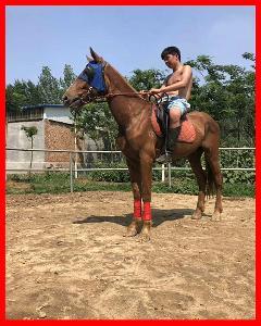 济宁养马场