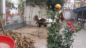 湖南矮马养殖场在哪里专业养马场