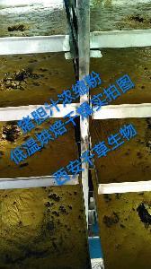 鲜猪胆汁提取物 厂家生产供应天然提取物鲜猪胆粉