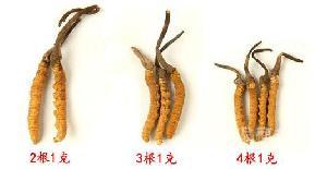 冬虫草价格一克多少(一克有几根)