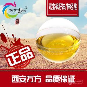 元宝枫籽油  99% 高含量   植物保健油   厂家直销