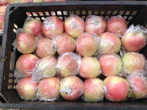 今年的嘎啦苹果价格  山东省 嘎啦苹果产地价格