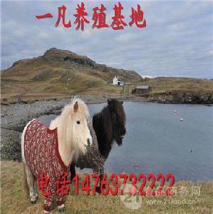 马匹的价格