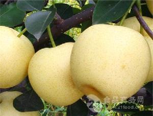 梨子产地直销批发价格