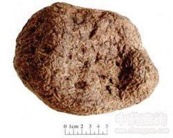 茯苓提取物 10:1 茯灵云苓茯菟松腴松薯松苓提取物