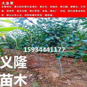 3公分山楂樹價格==3公分山楂樹價格