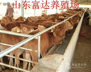 贵州遵义牛交易市场