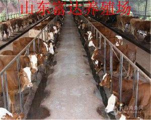 牛犊几个月可以驱虫