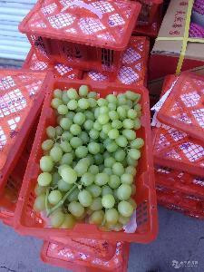 新疆无核白葡萄特级新鲜水果50箱