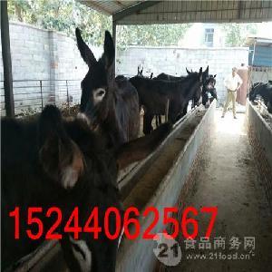 一頭肉驢駒多少錢