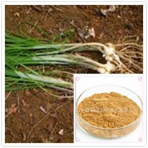 薤白浸膏粉 宁夏厂家 薤白提取物 植物提取物 薤白粉 薤白速溶粉