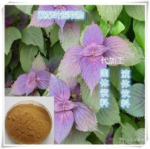 紫苏浓缩粉厂家代加工固体饮料制粒压片OEM