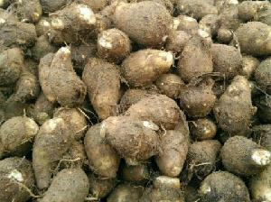 毛芋頭產地價格 山東省芋頭價格及批發價格